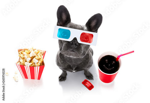 Foto op Aluminium Crazy dog dog to the movies