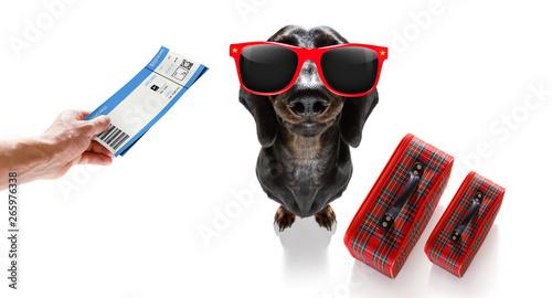 In de dag Crazy dog dog on vacation