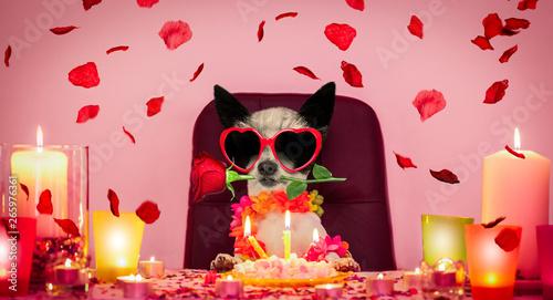 Fotobehang Crazy dog valentines happy birthday dog