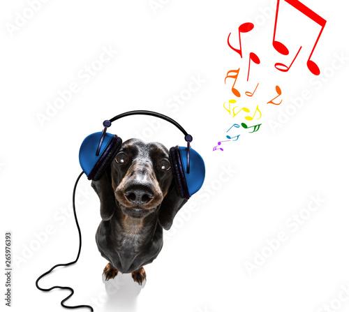 Stickers pour porte Chien de Crazy dog listening to music