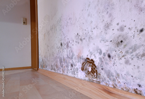 Mold, wall, cellar, brown cellar sponge, fungus, damage, Canvas-taulu