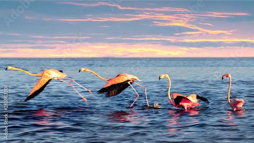 Garden Poster Flamingo Beautiful pink flamingos in a blue sea lagoon at sunset. Mexico. Celestun. Wild nature.