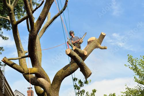 Valokuvatapetti Big Log Coming Down, Tree Removal