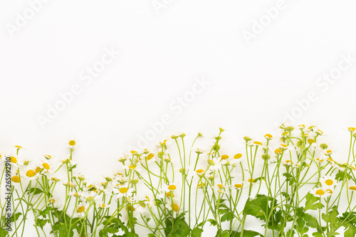 Poster Muguet de mai Chamomile flowers floral framee. Flat lay, top view.