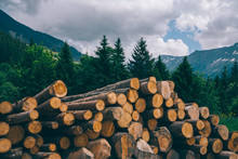 Sawed Firewood Dropped High Up In The Swiss Alps. Freshly Cut Tree Logs Piled. Pile Of Logs Near Hiking Trail In Wiesen In Switzerland.