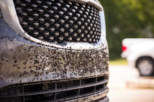 The Bumper And Hood Are Covered With A Large Number Of Dead Insects And Flies. The Car After A Trip On The Autobahn Is Preparing To Wash.