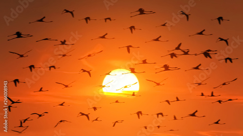 A huge flock of flamingos in backlight on the background of a beautiful orange African sunset. Wildlife of Africa.
