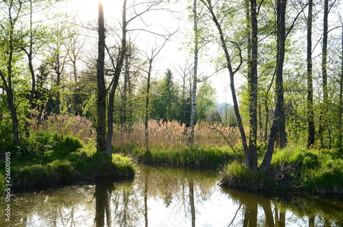 Sun shining through trees at a fishpond in springtime Wallpaper Mural