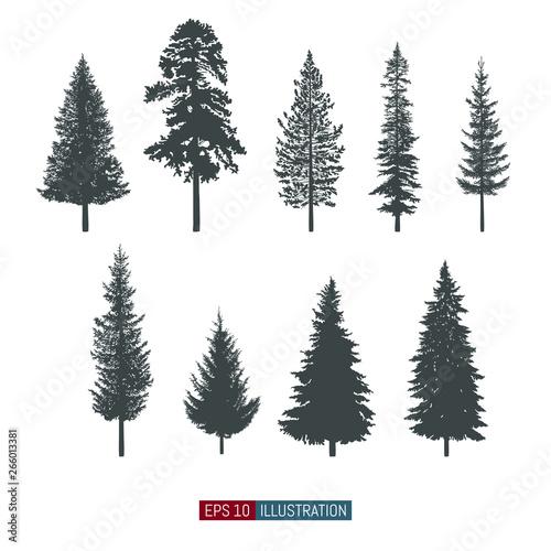 Fotografija  Coniferous tree isolated silhouettes set