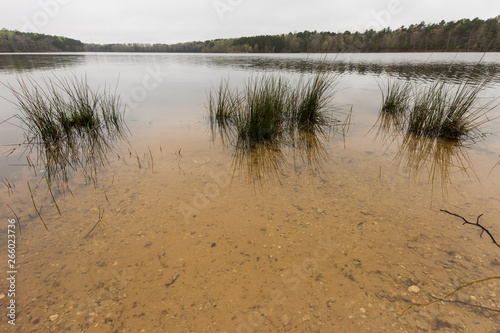 Water plants in a lake.  St. Mary's River State Park, Leonardtown, MD, USA. © sstevens3