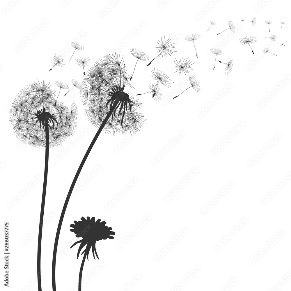 Fototapety, obrazy: Abstract black dandelion, flying seeds of dandelion - for stock