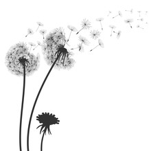 Abstract Black Dandelion, Flyi...