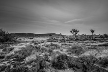 The Desert Of Nevada In The Evening - Travel Photography