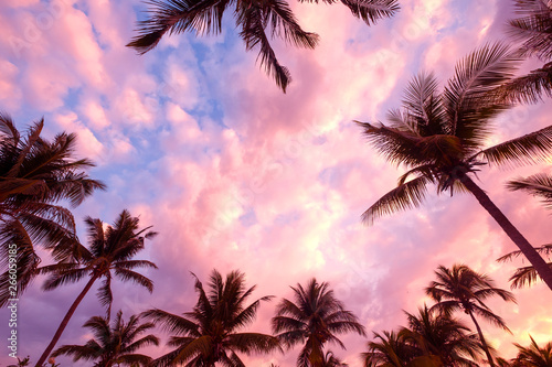 Foto auf Leinwand Rosa hell Silhouette of tropical beach during sunset twilight. seascape of summer beach and palm tree at sunset. vintage color tone