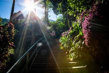 510 Steps To Wat Tham Pha Plon...