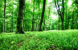 Green forest and grass with tree at rain - 266076175