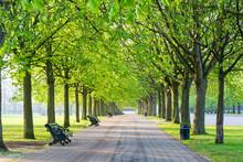 Recreational Path In Green Par...