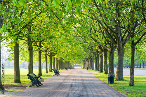 Fototapeta park recreational-path-in-green-park-lined-up-with-trees-and-beanch