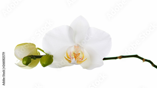 Photo sur Toile Orchidée Orchid isolated on white background.