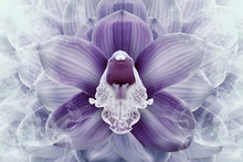 Floral Halftone Purple And White Background. Flower And Petals Of A Purple Orchid Close Up. Nature.