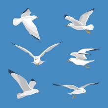 Set Of Simple Flyingl Seagull