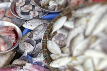 Fresh Fish At Local Traditional Market In Hue, Vietnam. Selective Focus.
