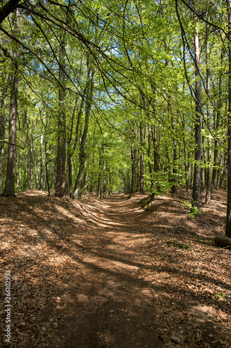 green forest with path, way, street