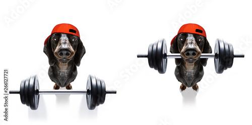 Fotobehang Crazy dog personal trainer dog