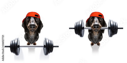 In de dag Crazy dog personal trainer dog