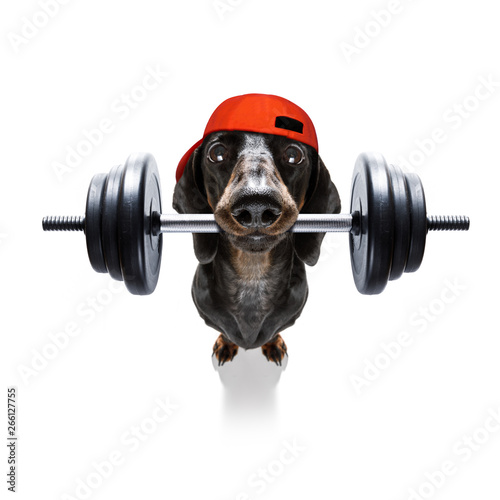 Papiers peints Chien de Crazy personal trainer dog