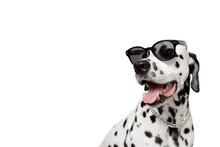 Dalmatian Dog Portrait With Tongue Out Isolated On White Background. Cool Dog In Black Glasses. Dog Looks Left. Copy Space