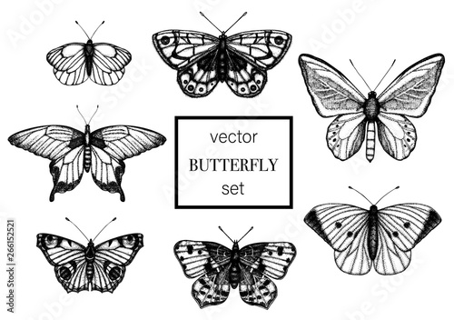Photo sur Toile Papillons dans Grunge Vector set of hand drawn black and white butterflies. Engraving retro illustration. Realistic insects isolated on white background. Detailed graphic drawing in vintage style