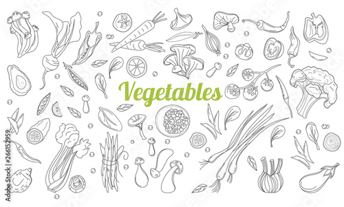 Linear graphic. Vegetables background. Scandinavian style. Healthy food. Vector illustration. Hand drawn fruits and vegetables doodle set.