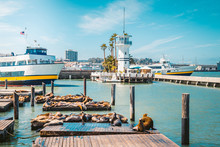 San Francisco Pier 39 With Famous Sea Lions, California, USA