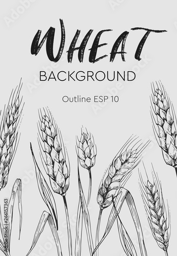 Fototapety, obrazy: Card teplate. Background with wheat ears. Hand drawn illustration converted to vector