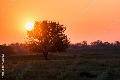 Aluminium Prints Autumn Beautiful silhouette of the tree at sunrise in steppe