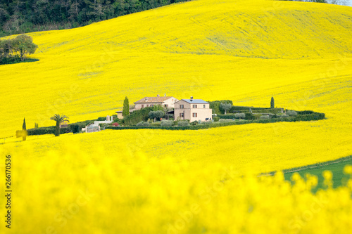 Poster Jaune Farm surrounded by yellow flowers
