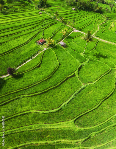 Aerial view of rice terraces Canvas Print