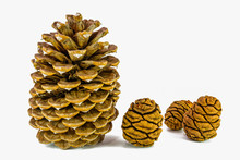Giant Sugar Pine Cone Left And Giant Sequoia Cones Isolated On The White Background.