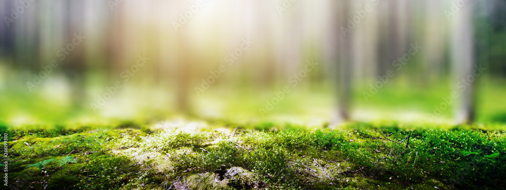 Fototapety, obrazy: Wild forest panorama