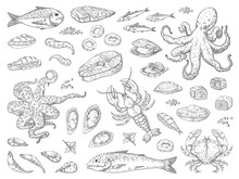 Hand Drawn Seafood. Octopus Squid Crab Oyster And Marine Fish Sketch Drawing For Restaurant Menu. Vector Sea Meal Engravements