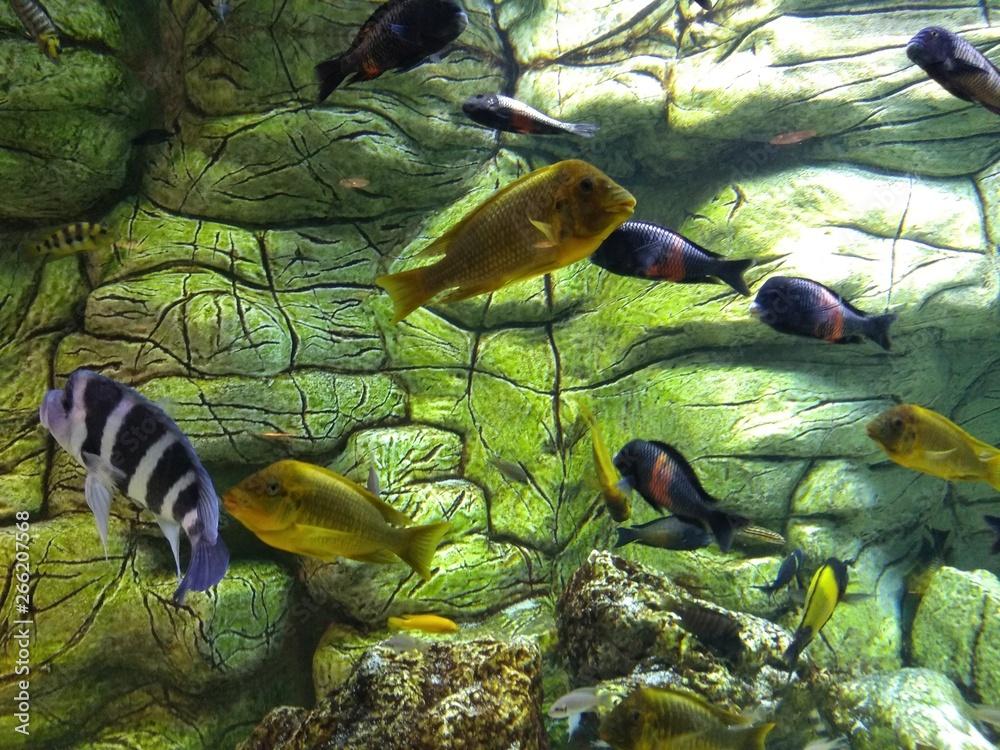 Fototapeta Egzotyczne akwarium