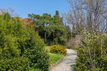 Fototapeta na wymiar Image of a walkway in the spring park.