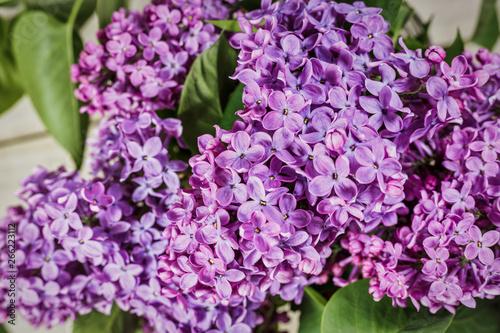 Foto op Plexiglas Lilac Blooming lilac flowers