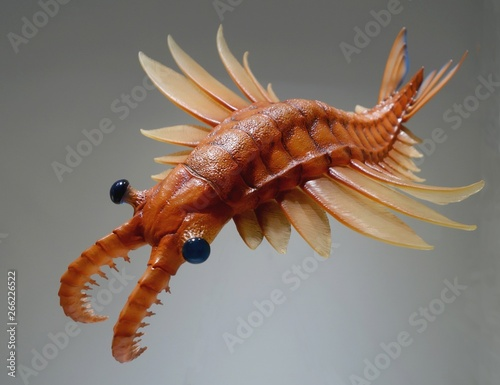 Anomalocaris a scary looking ancient lifeform Wall mural