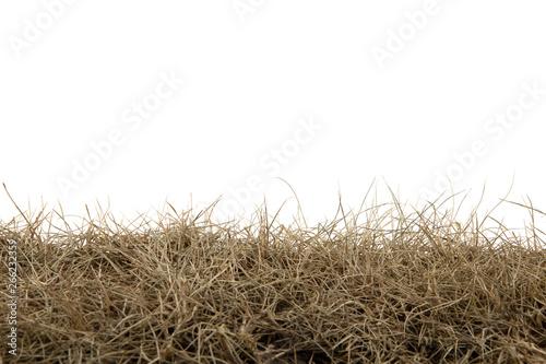 Obraz na plátně Dry grass isolated on white background