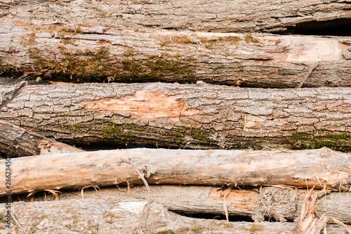 fototapeta na ścianę Wood Background Texture