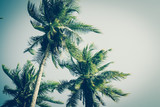Coconut palm trees in sunset light. Vintage background. Retro toned poster. - 266236170