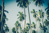 Coconut palm trees in sunset light. Vintage background. Retro toned poster. - 266236190