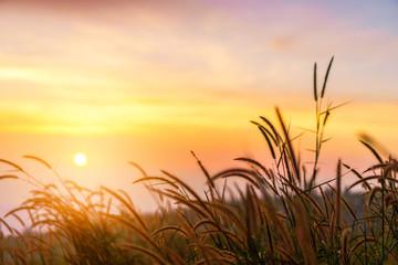 Panel Szklany Wschód / zachód słońca Yellow meadow with sunrise at morning, Selective focus.